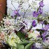 Flower visitor Libelle